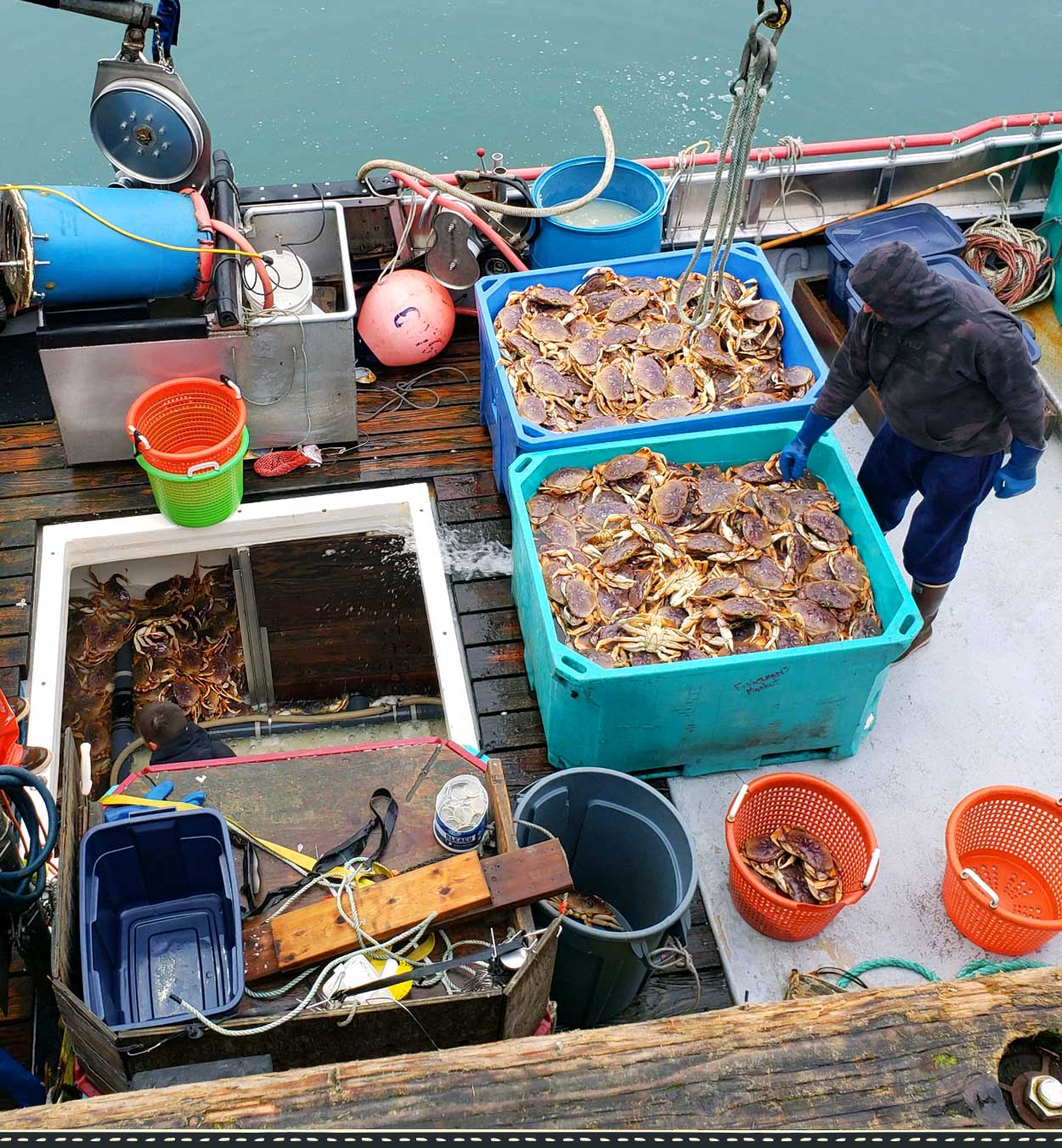 Fisherman's Market Dungeness Crab haul; F/V Silverquest Newport Oregon