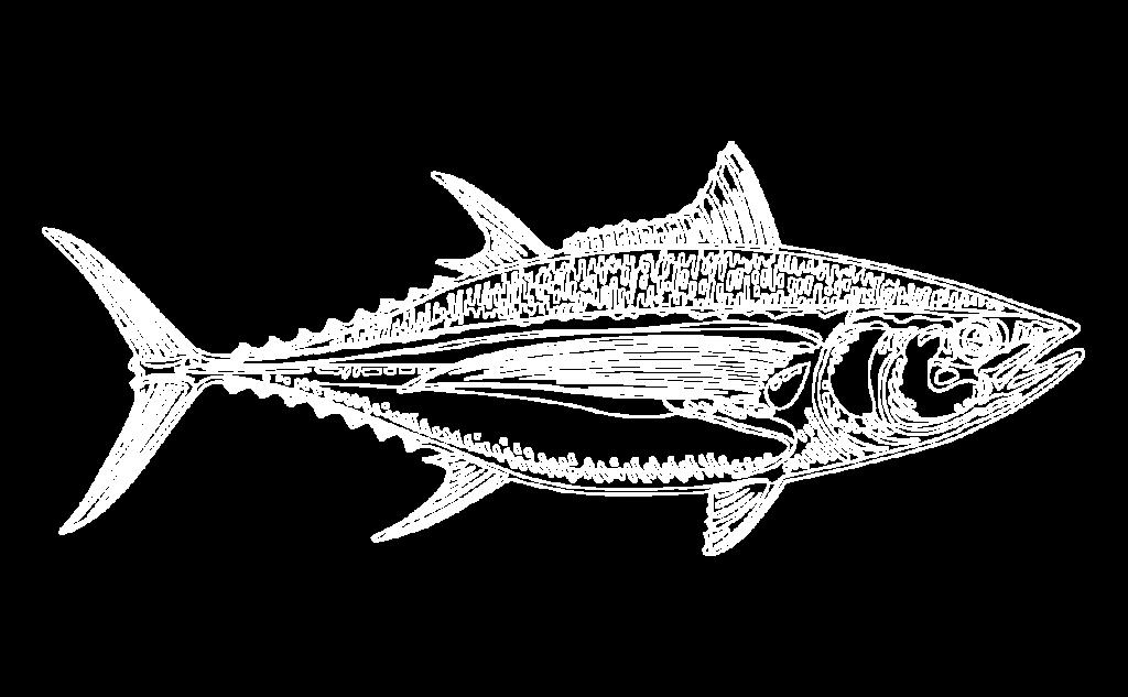 Fisherman's Market Albacore Tuna Illustration
